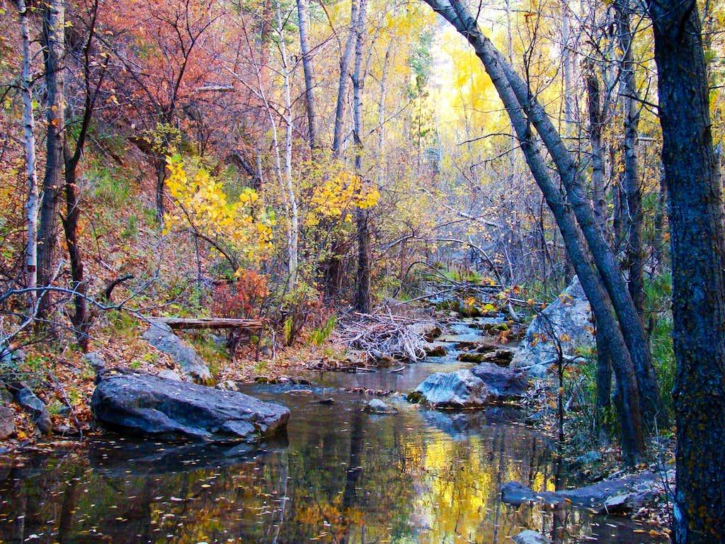 Autumn Serenity on Little Elk Creek