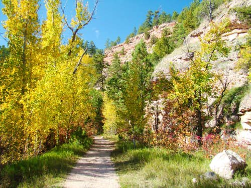 Aspens along Little Elk Canyon Trail