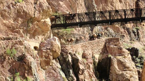 Grand Canyon Black Bridge with mules