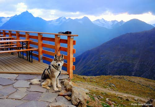 A nice and friendly husky at Breslauer Hut