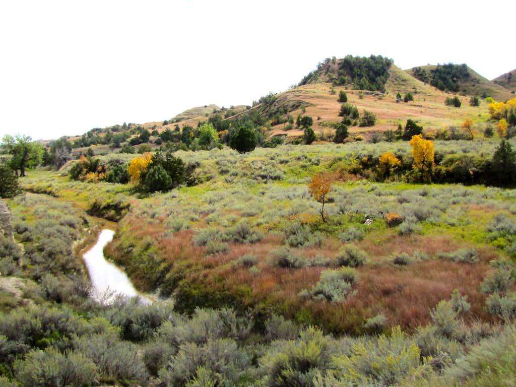 Paddock Creek
