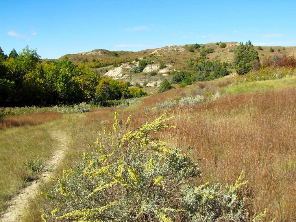 Lone Tree Trail