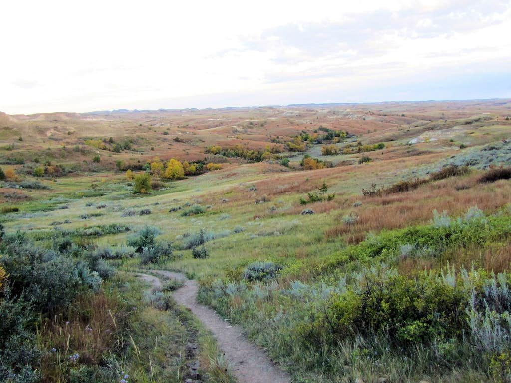 Near Petrified Forest Trailhead