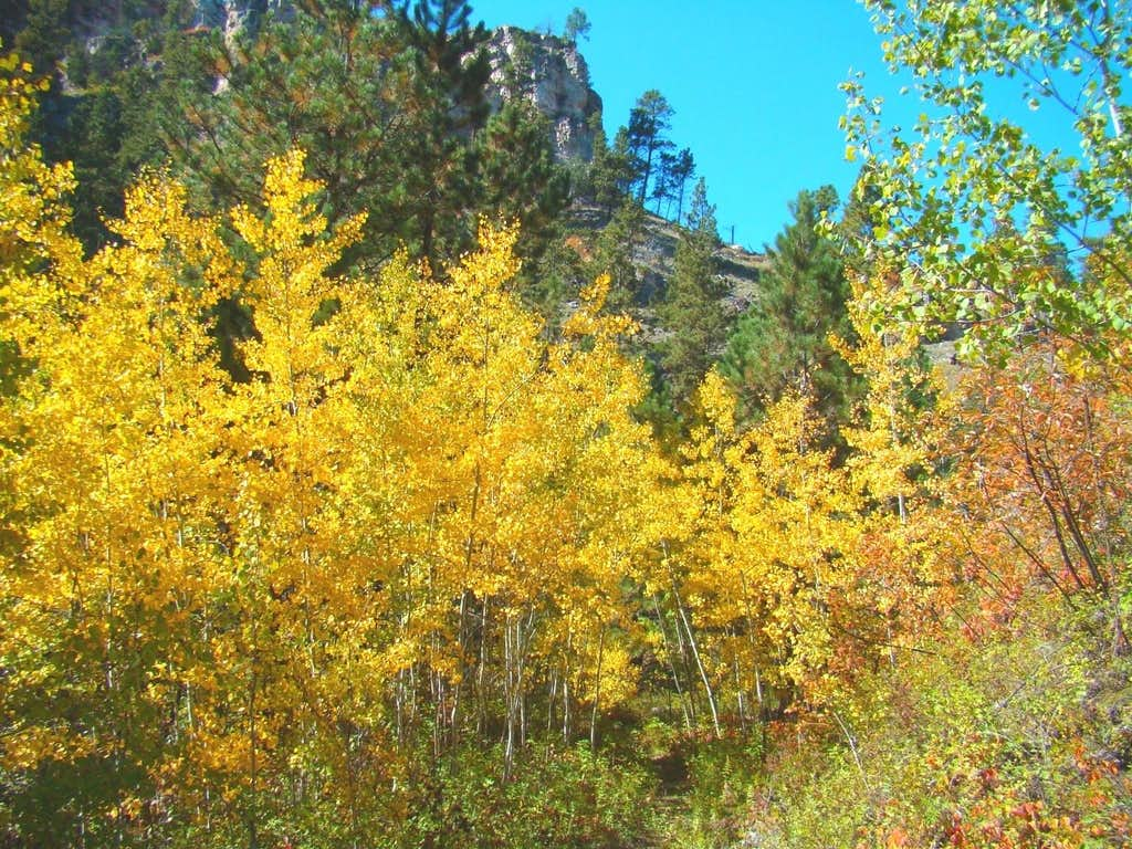 Hell Canyon Aspens