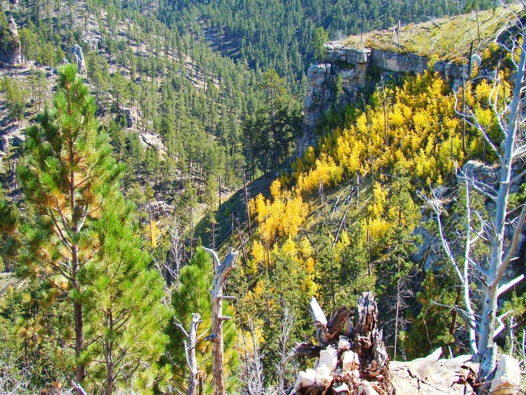 Radiant Aspens in Hell Canyon