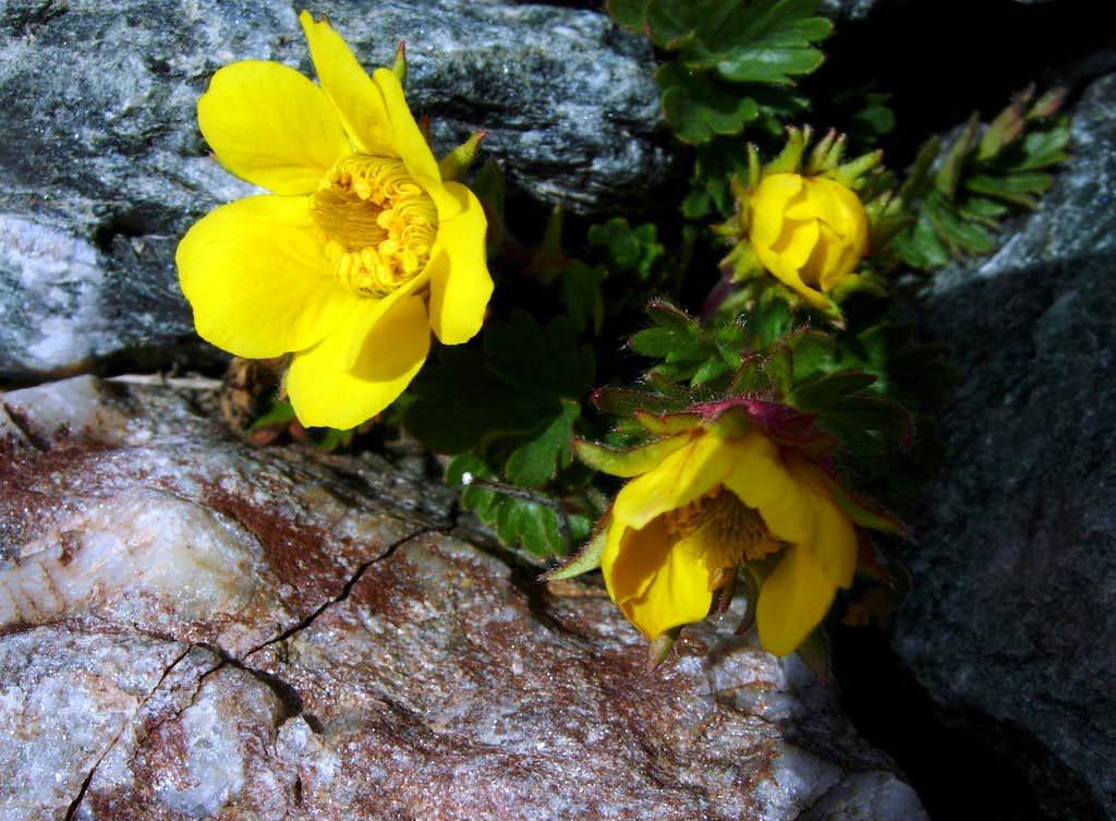 June blooming on Valle del Pozzo/Butzental