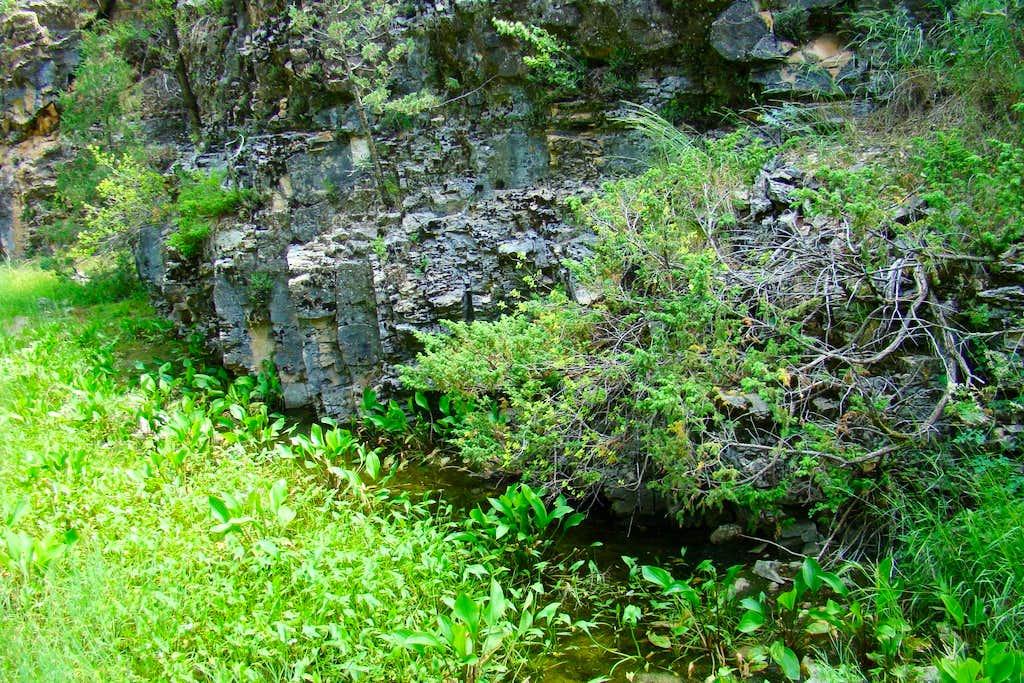 Wildcat Canyon Spring