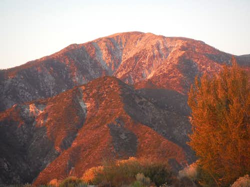 Red Mount Baldy