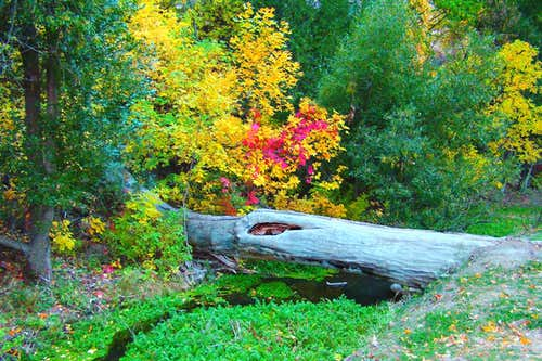 Autumn Colors at Chadron State Park