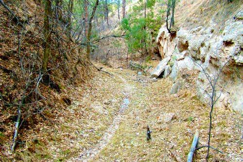 Trail through Canyon Floor