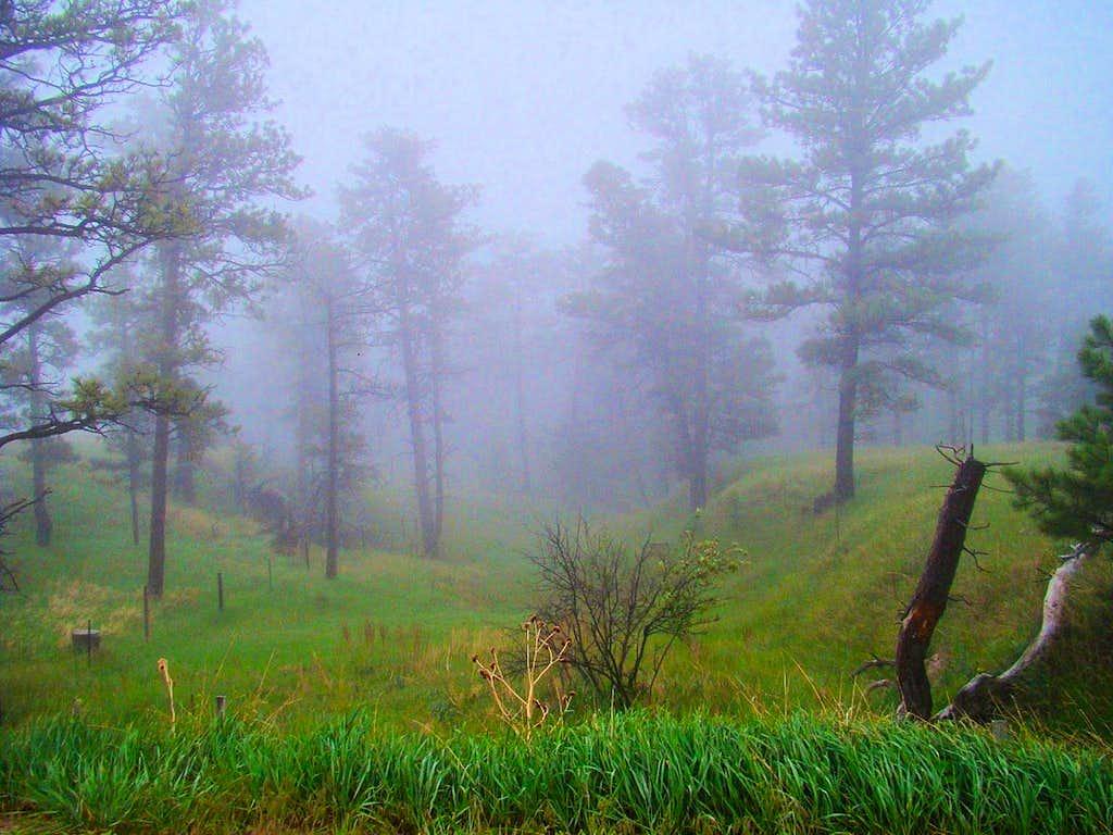 Foggy Afternoon near Belmont