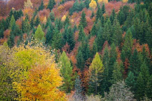 Fall scenery over Obrucne
