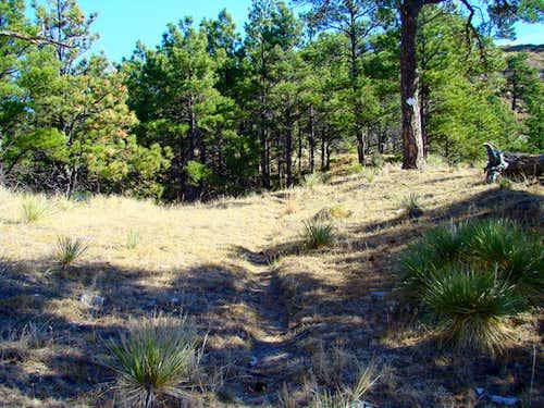 Saddle Rock Trail View