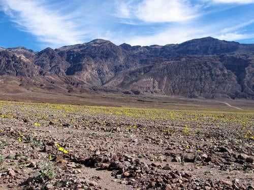 Desert Gold & the Black Mountains