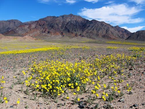 Desert Gold Beneath Ashford Peak