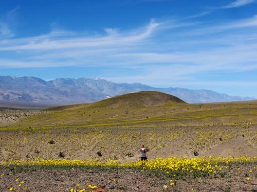 Desert Gold & the Panamint Range