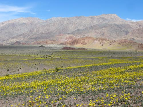 Desert Gold Beneath the Black Mountains