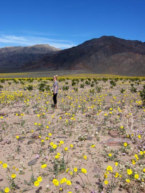 Enjoying the Desert in Bloom