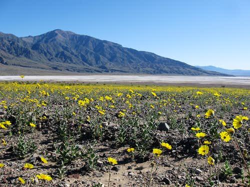 Desert Gold & Smith Mountain