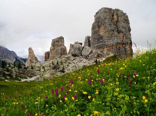 Blooming at foot of Cinque Torri