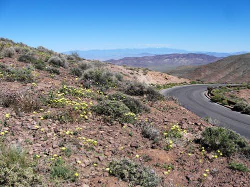 Wildflowers Near Dante's View