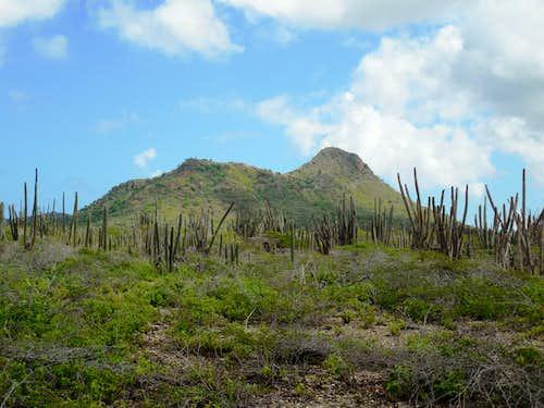 Monte Brandaris (Bonaire)