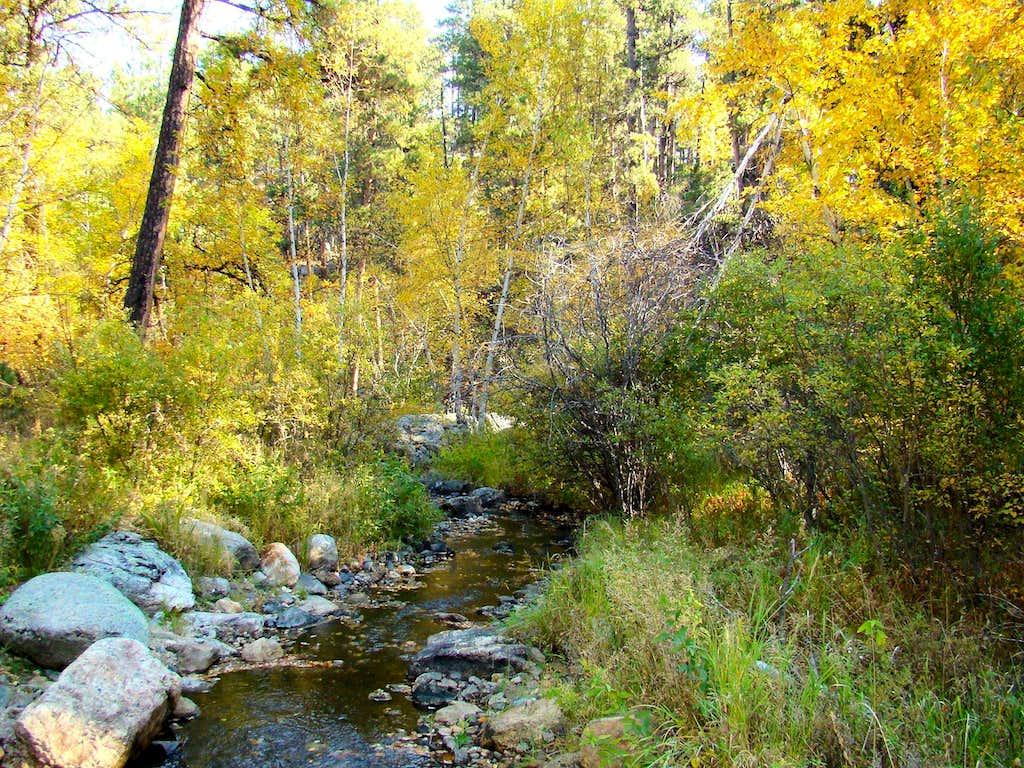 Black Elk Wilderness Autumn
