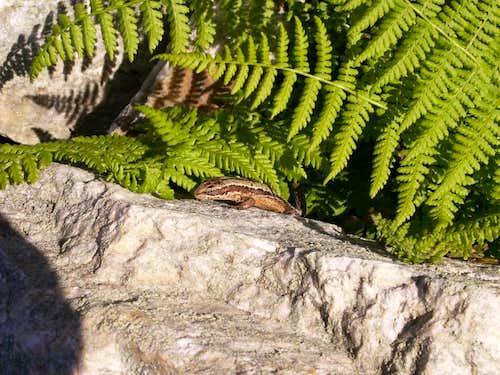 Reptile ...