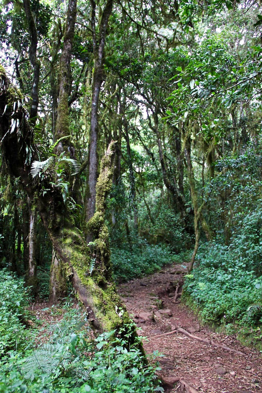 Rainforest section