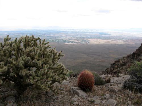 Cactus Along the Summit Ridge