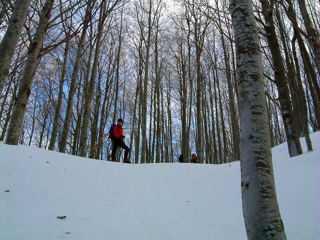 Beech wood along Pumacioletto standard route