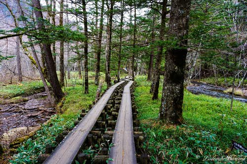 The scenic wooden trail