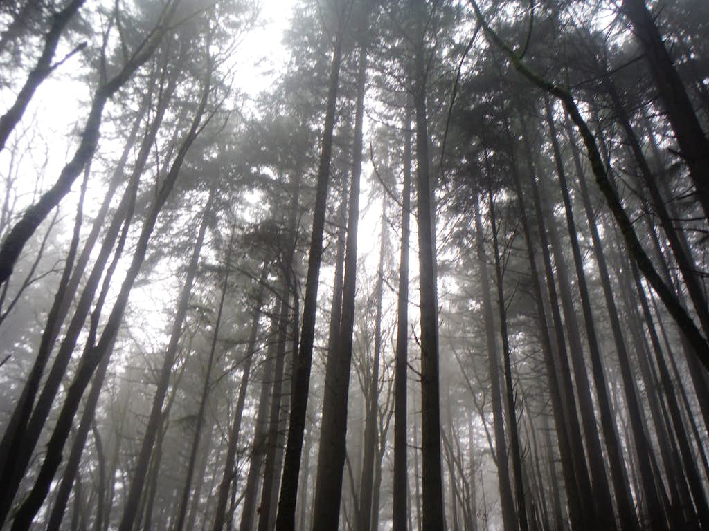Foggy through the trees on Mount Talbert