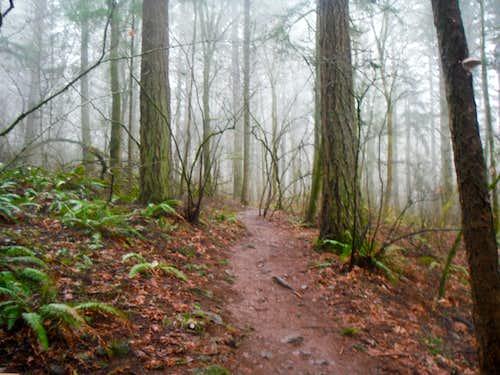 Typical trail shot on Mount Talbert