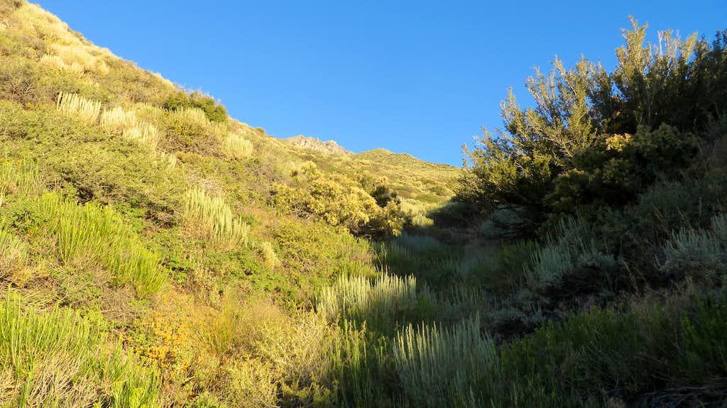 Fuller Creek Waterbed