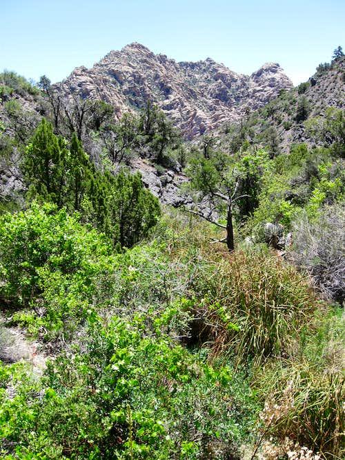 La Madre Spring & White Rock Hills