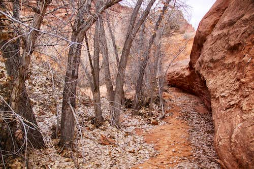 Trail towards the Tunnel