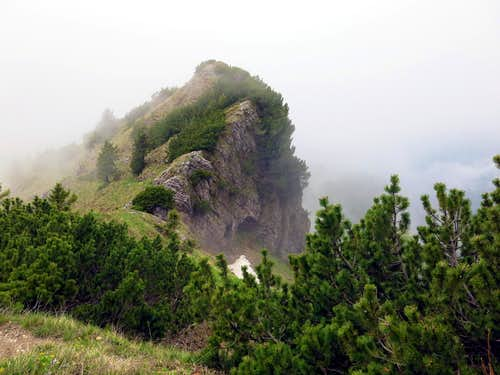 Mountain dwarf pine on Gavardina ridges