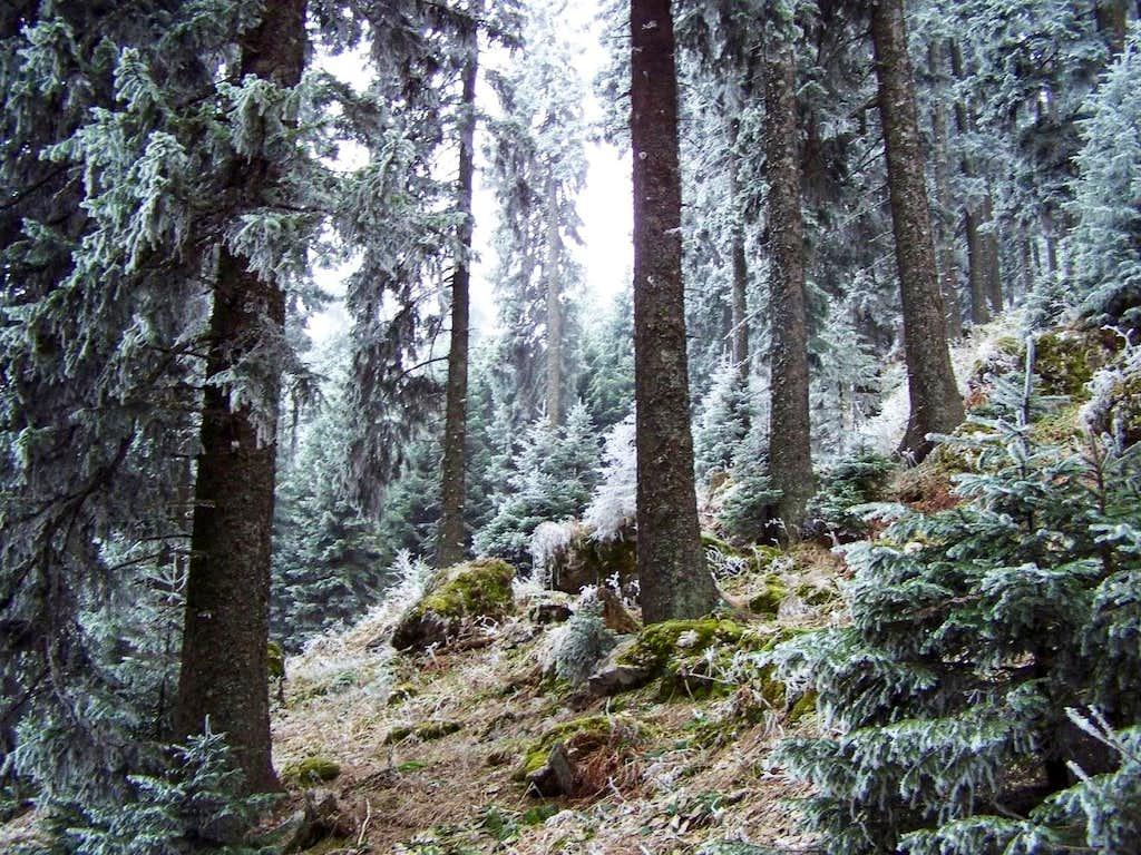 Beautiful forest near the peak of Urslja gora