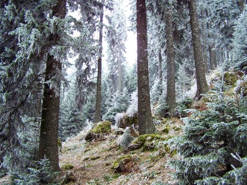 Beautiful forest near the peak of Urslja gora