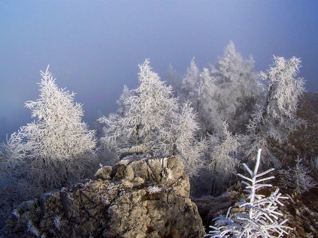Winter scene on Urslja gora