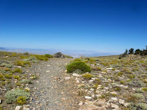 Arcane Meadows