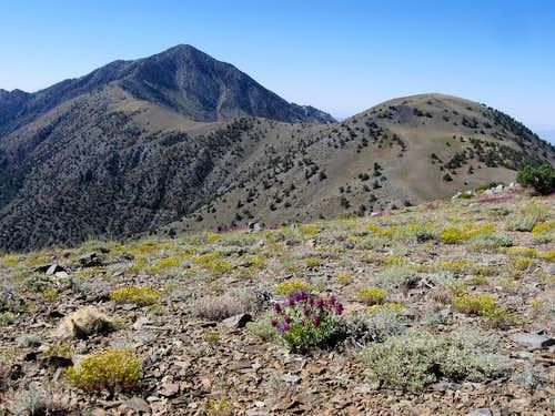 Telescope Peak & Bennett Peak