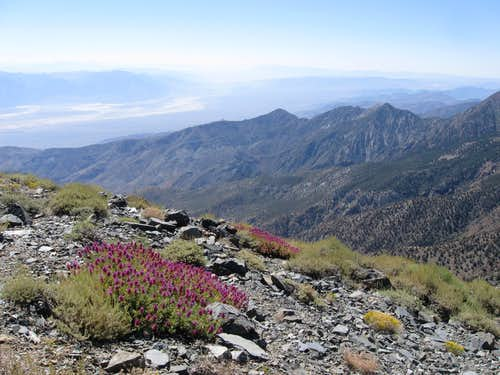 Looking Southeast Into Death Valley From Near the Summit of Rogers Peak