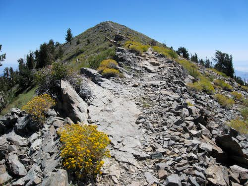 On the Summit Ridge of Telescope Peak
