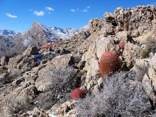 Barrel Cactus & Snow-Capped Peaks