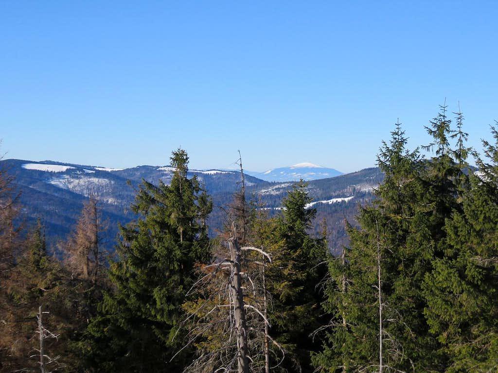 Between trees - Babia Góra
