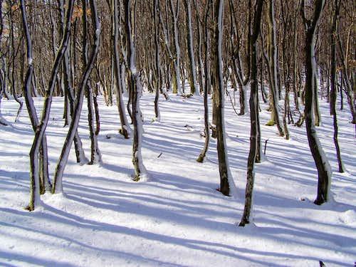 Dense forest on Lipovac