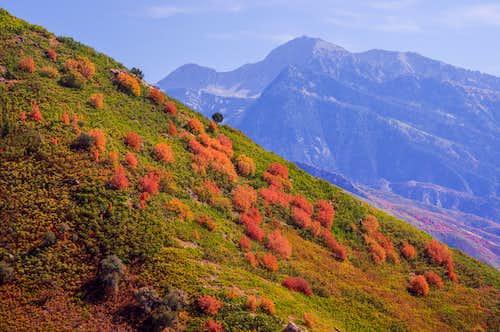 Lone Peak From Mt. Olympus Trail