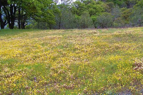 Wildflowers carpet many of...